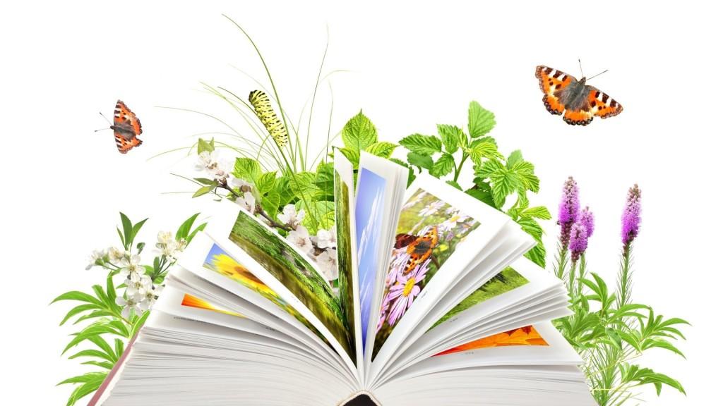 день экологич знаний