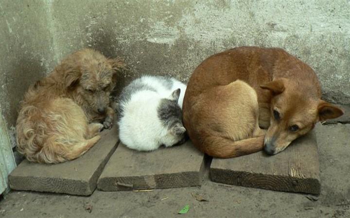 Необычные и неофициальные праздники августа. Всемирный день бездомных животных