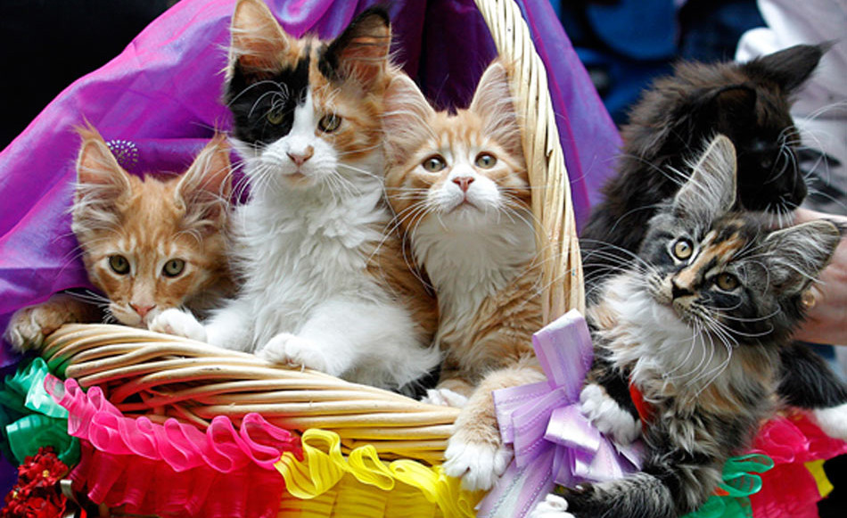 Необычные и неофициальные праздники августа. Всемирный день кошек