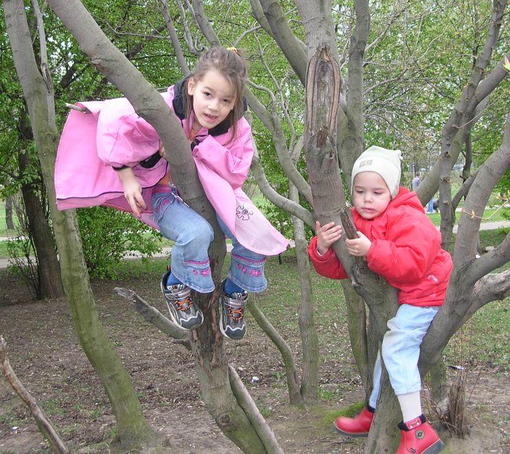 Необычные и неофициальные праздники августа. День лазанья по деревьям
