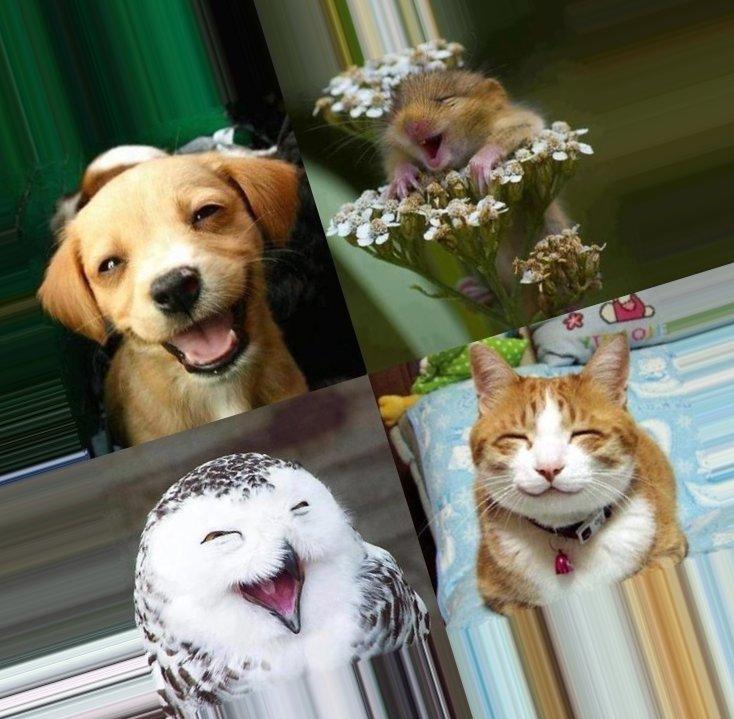 Необычные и неофициальные праздники октября: как отмечать. Всемирный день животных