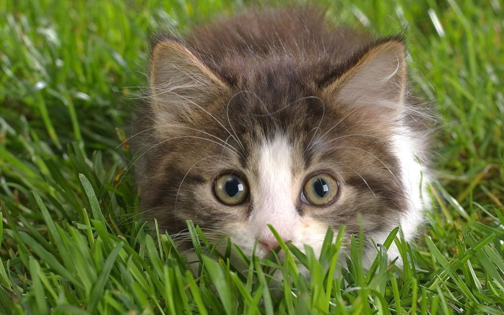 В Петербурге открываются ясли для котят