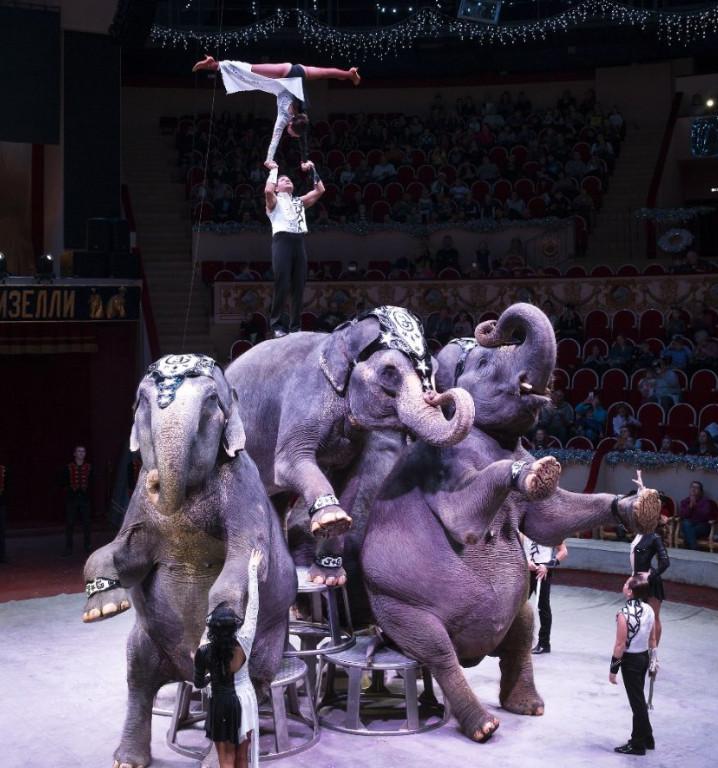 Первый международный фестиваль циркового искусства