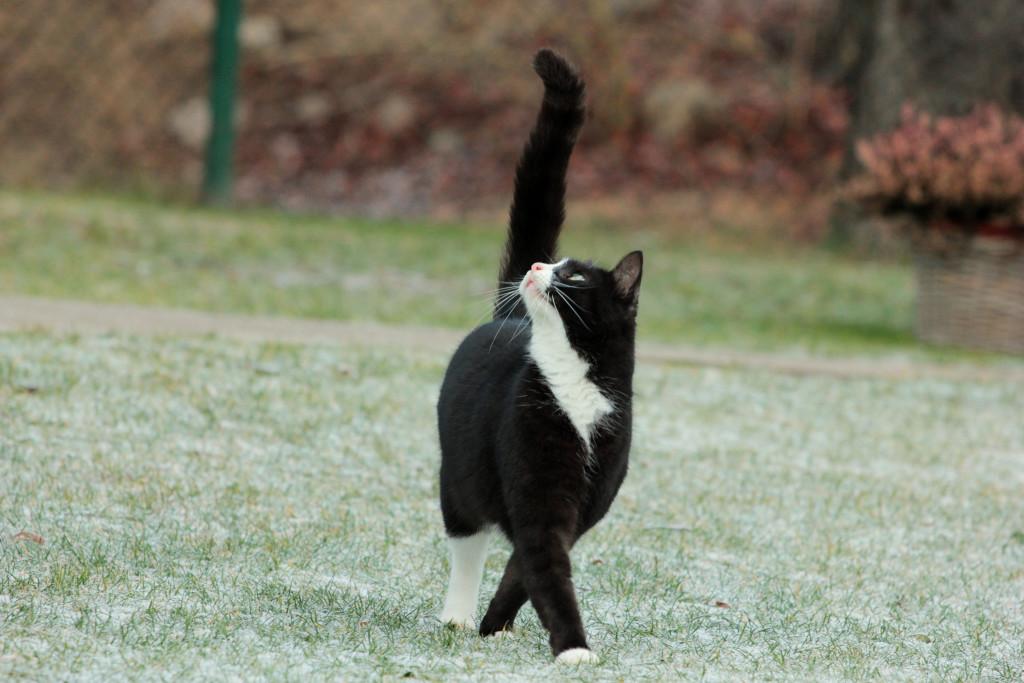 Все, кто хочет понимать кошку лучше, встретятся в этот четверг в Клубе ЗооВолонтёров на Литейном пр
