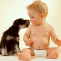 Снизить риск развития астмы у ребенка помогут домашние любимцы