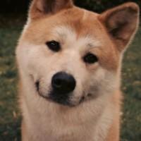 «Хатико: Самый верный друг»