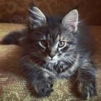 1 марта — День Кошек
