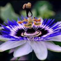Необычные букеты цветов