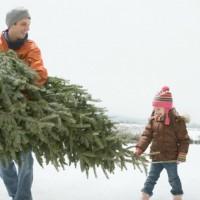Куда сдать елку после Нового года